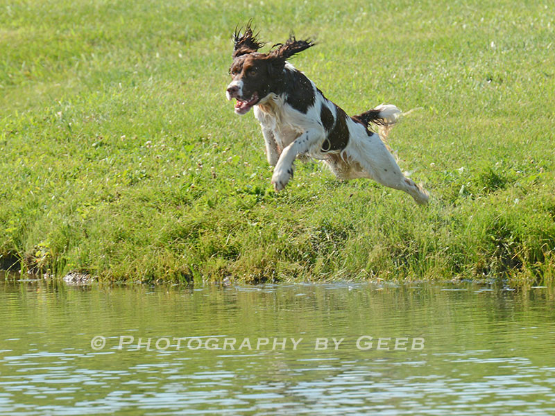 Jeter Flying into the water