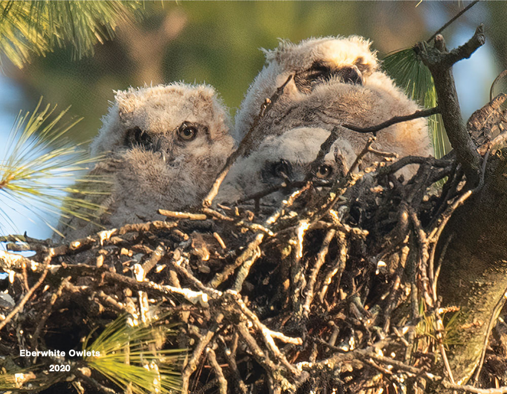 01-Owlets