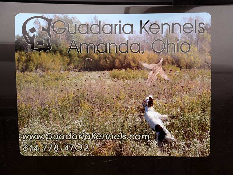 Guadaira Kennels Magnetic signs featuring FC Cayla